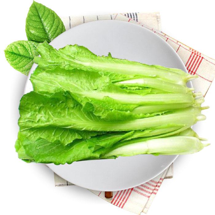 彩铅白菜的画法步骤